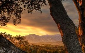 Картинка горы, дерево, даль