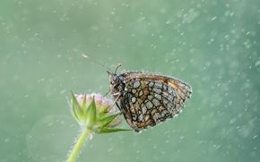 Картинка капли, дождь, бабочка, растение, обои от lolita777