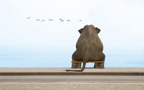 Обои скамейка, слон, чайки