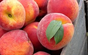 Обои листья, вкуснятина, персики, Фрукт, плод