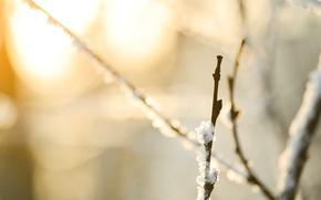 Обои макро, snow, снег, macro, природа, боке, branches, 4608x3072, ветки, nature, bokeh