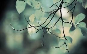 Картинка зелень, листва, ветка