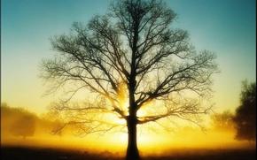 Обои солнце, дерево, Свет, 151