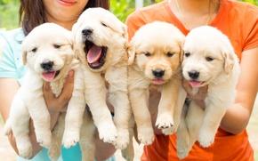 Картинка собаки, щенки, квартет