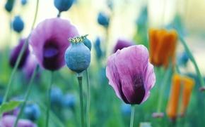 Обои красивые обои, свежесть, разноцветные, поле, маки, разнотравье