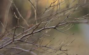 Картинка осень, ветки, боке