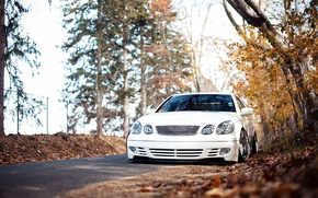 Картинка осень, лес, белый, перед, stance, Lexus GS