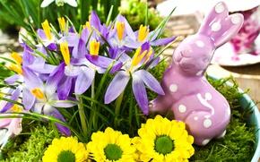 Картинка цветы, весна, желтые, кролик, Пасха, фиолетовые, крокусы, статуэтка, праздники