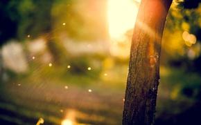 Картинка солнце, макро, лучи, деревья, фон, дерево, widescreen, обои, размытие, ствол, wallpaper, кора, широкоформатные, background, tree, …
