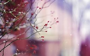 Картинка ягоды, снег, зима, ветви, природа, ветки, растение