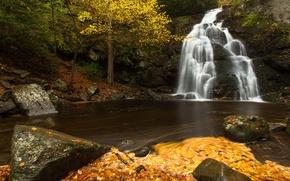 Картинка осень, листья, река, камни, водопад, каскад, Tennessee, Теннесси, Great Smoky Mountains National Park, Spruce Flats ...