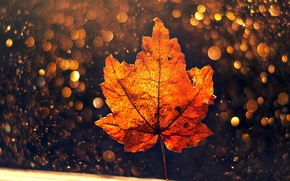 Картинка осень, макро, лист, боке