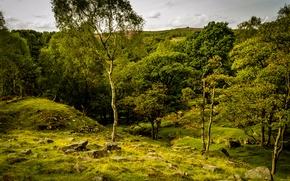Картинка зелень, лето, трава, деревья, камни, Великобритания, Peak District National Park, Longshaw Estate