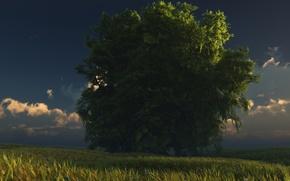Обои дерево, digital, небо, трава, green and gold, облака
