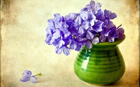 Обои цветок, фиолетовый, цветы, ваза, флоксы