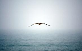 Обои туман, вода, чайка