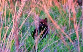 Картинка трава, кот, закат, одиночество