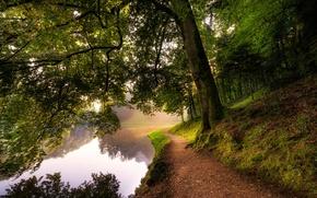 Картинка лес, деревья, река, мох, тропа