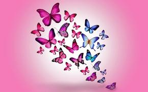 Картинка бабочки, colorful, blue, pink, butterflies, design by Marika
