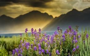 Картинка облака, лучи, цветы, горы