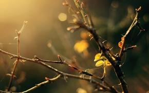 Картинка листья, макро, деревья, ветки, желтый, фон, дерево, widescreen, обои, паутина, размытие, листик, wallpaper, широкоформатные, background, …