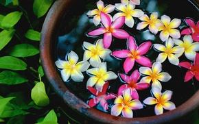 Картинка вода, макро, Цветок, flower