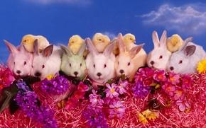 Обои цветы, цыплята, Кролики
