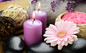 Картинка цветы, камни, свечи, гербера, морская соль