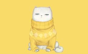 Картинка кот, взгляд, мордочка, свитер