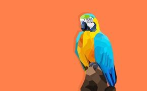 Картинка обои, рисунок, вектор, попугай