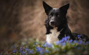 Картинка лето, цветы, собака, луг, черная, обои от lolita777