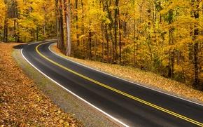 Обои дорога, лес, осень, природа, пейзаж