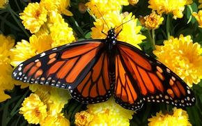 Картинка цветы, бабочка, полевые