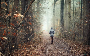 Картинка дорога, осень, лес, прогулка
