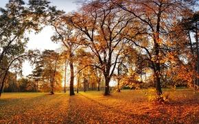 Картинка осень, листья, солнце, деревья, парк, забор, вечер, желтые