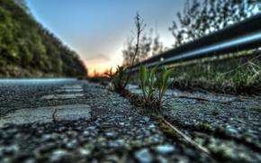 Картинка дорога, асфальт, листья, макро, жизнь, растение, росток