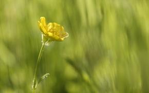 Обои макро, красота в простом, зелень, желтый, цветок