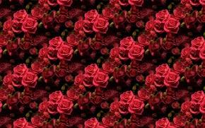 Обои роза, фон, цветы