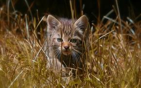 Обои прогулка, лесная кошка, трава, дикая кошка, котёнок