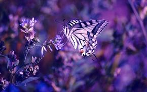 Картинка цветок, фиолетовый, макро, цветы, сиреневый, бабочка, цвет, растения, насекомое, лиловый