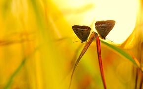 Картинка трава, солнце, макро, насекомые, желтый, фон, бабоски