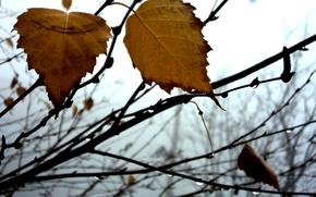 Картинка туман, листок, Осень, береза