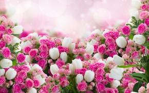 Обои розы, тюльпаны, листики, цветы