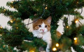 Картинка кошка, гирлянда, праздник, котёнок, белый, рыжий, елка, кот