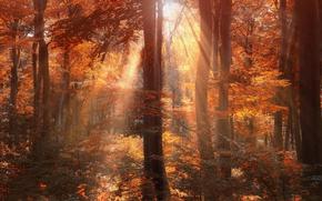 Картинка осень, лес, солнце, лучи, деревья