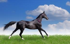 Обои поле, лето, трава, облака, конь, бег