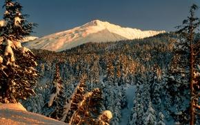 Картинка зима, лес, снег, деревья, пейзаж, горы, парк