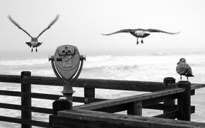 Обои Причал, чайки, бинокль, черно-белая