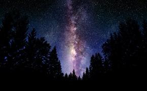 Картинка лес, небо, космос, ночь, пейзажи, звёзды, млечный путь