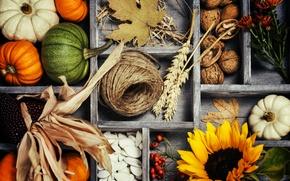 Картинка vegetables, овощи, autumn, листья, тыква, урожай, корзина, still life, осень, harvest